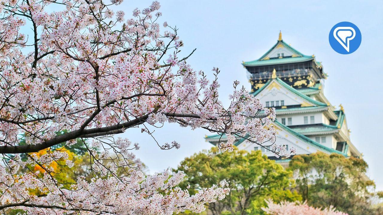 5 Astuces Pour Vous Aider À Apprendre Le Japonais